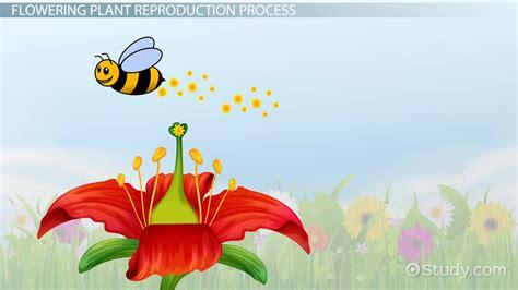 plant reproduction lesson  kids video  lesson