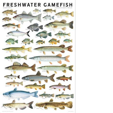 freshwater fish north america freshwater gamefish