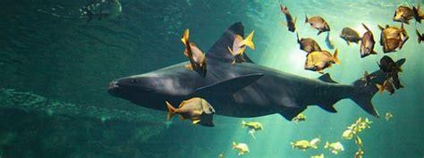 aquarium la rochelle requin les plus beaux aquariums le evasion