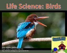 life science birds images birds life science