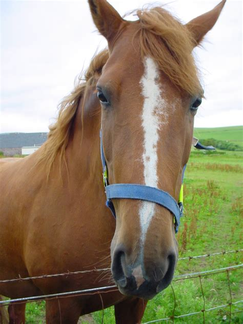 horse horses animal pet pets lovers friendly welcome space having owners quantum linguistics appreciate incidentally because there yourpetspace info
