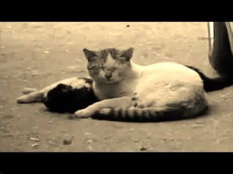traurig katze ist tot
