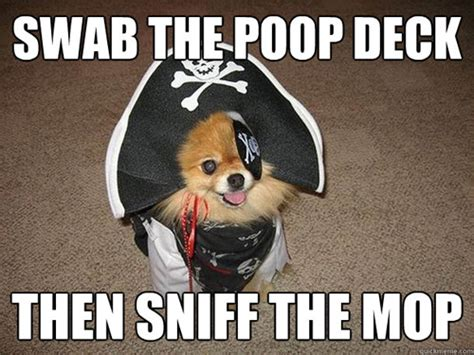 Sexually Inappropriate Memes - the 10 best inappropriate sexual innuendo dog that dresses and talks like a pirate memes