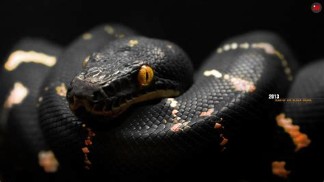 Black Snake Wallpapers - Wallpaper Cave