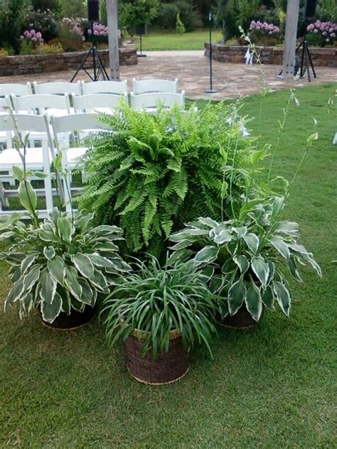 outdoor garden plants ask the experts how to have elegant decorations in an unusual setting onewed com