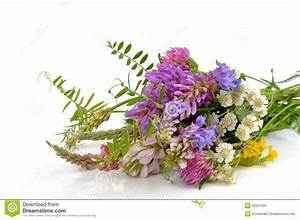 Bouquet Of Wildflowers Stock Photo - Image: 42231991
