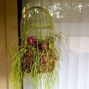 The Rainforest Garden  Diy Hanging Birdcage Planter