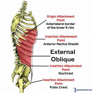 Abdominals Are Our Muscles Referred To As Ab U0026 39 S Or 6 Pack
