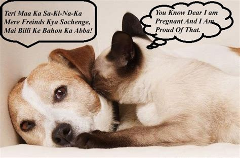 Funny Jokes About Cats and Dogs