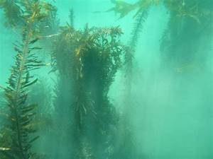 44 best images about The Art of Kelp Forests on Pinterest ...