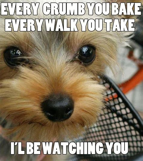 Funny Animal Memes Tumblr - 14 best funny meme images on pinterest ha ha so funny and fun things