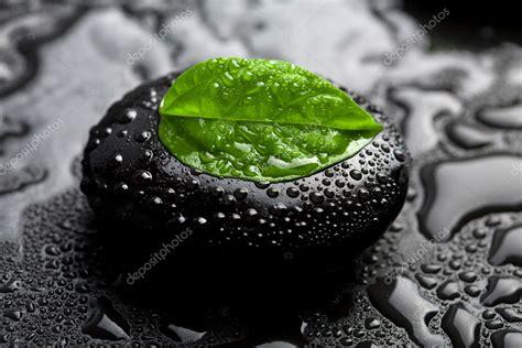 zen stone  leaf  water drops stock photo