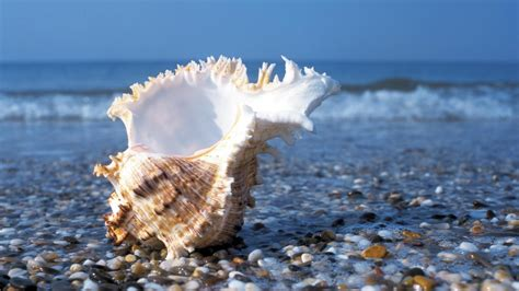shell  beach wallpaper  hd wallpaper background