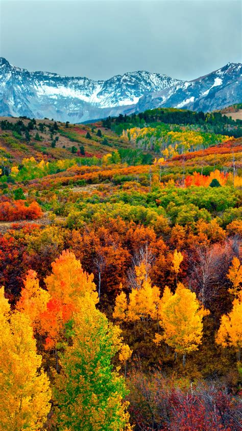wallpaper autumn forest mountain  nature