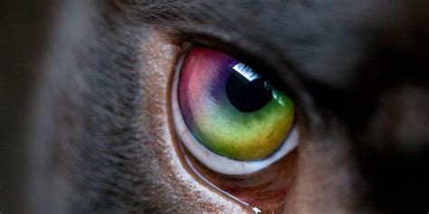 are all dogs color blind are dogs color blind the answer is not so black and