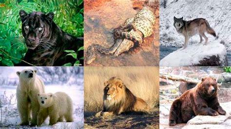 el reino animal animales carnivoros