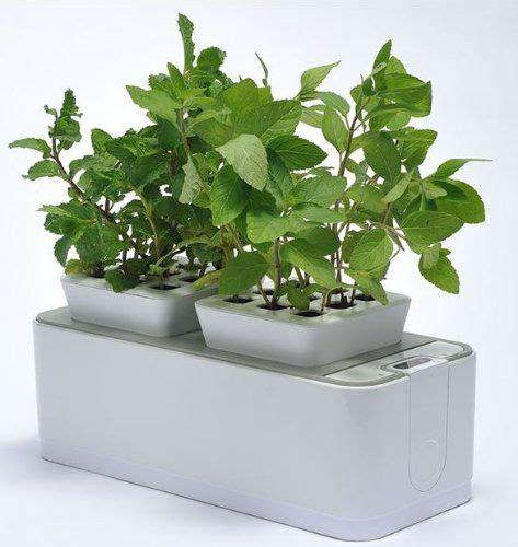 Indoor Windowsill Garden by Growing An Indoor Herb Garden Ideas For Potted Windowsill