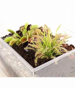 Pflanzen Im Aquarium : fleischfressende pflanzen im aquarium dehner ~ Michelbontemps.com Haus und Dekorationen