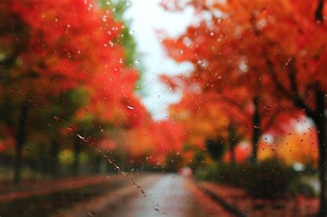 Autumn Rain Hd Desktop Wallpaper