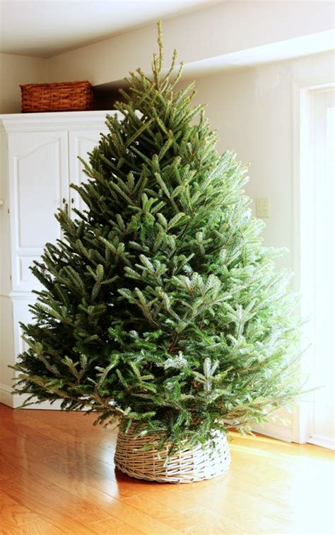 how to stand a real christmas tree 1000 ideas about real tree on slim tree trees and