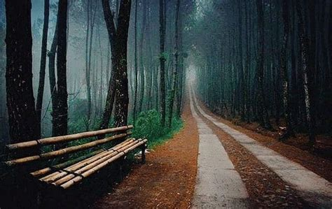 wisata hutan pinus ala ala eropa  hits  indonesia