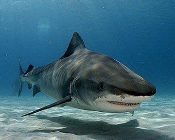 ideas  shark habitat  pinterest shark week  ocean crafts  shark week