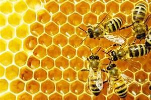 Wie überwintern Bienen : wie viele bienen leben in der natur ~ A.2002-acura-tl-radio.info Haus und Dekorationen