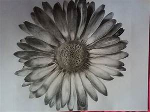 Daisy Flower Drawing Tumblr Daisy drawn by me : )   Andrew ...