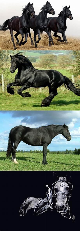 Draft Horse Horses Animals Forwallpaper