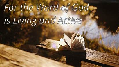 Word God Bible Scripture Infallible Abraham Today