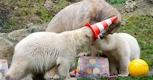 Some Polar Bears Had A Party And Things Got Massively Out