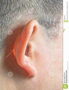 Human Ear Stock Photo  Image Of Deaf  Female  Complexion