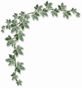 Aka Ivy Leaf Clipart - Clipart Suggest