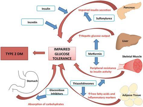 In Diabetes Mellitus Diabetes Mellitus Type 1 Pathophysiology Www Pixshark