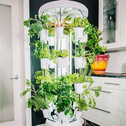 Hydroponic Indoor Vertical Gardening System Gardens Plant