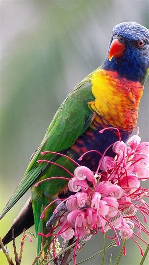 national geographic pink flowers rainbow lorikeet birds