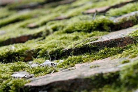 comment se d 233 barrasser des mousses sur un mur ou une terrasse starwax