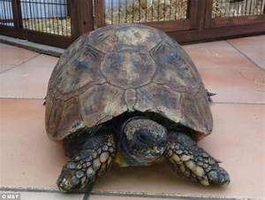 UK's oldest tortoise dies at the age of 130 after being ...