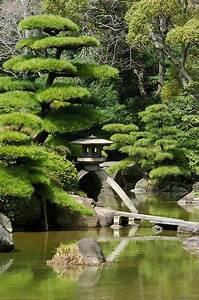 Jardin japonais : Quelles plantes et arbres pour un jardin