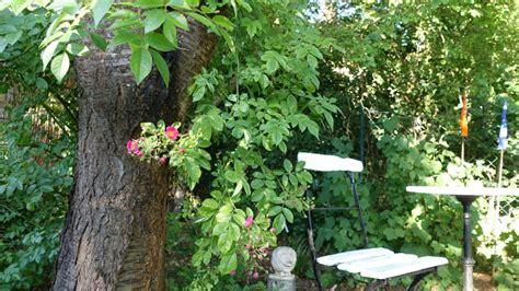 Bambus Wuchert Was Tun by Gartenplanung Runderneuern Teil 4