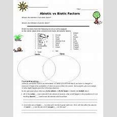 Abiotic Vs Biotic Factors Worksheet12  Abiotic Vs Biotic Factors Worksheet Website 1 What Is