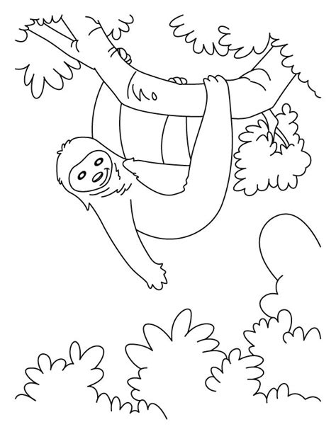hanging sloth coloring pages   hanging sloth