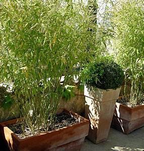 Bambou En Pot Pour Terrasse : un petit jardin de village avec terrasse jardins de paysagistes jardinage en 2019 terrasse ~ Louise-bijoux.com Idées de Décoration