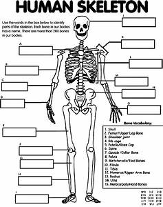 Index Of   Fredandrita  Bones  Bones  Labelskeleton Files