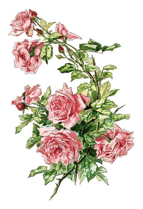 vintage image branch  pink roses  design shop blog