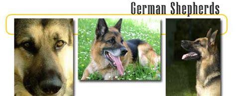 german shepherds info  games