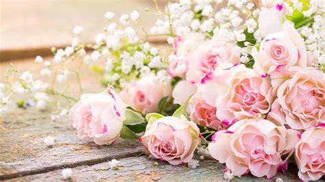 Rosa Blumen by Die 66 Besten Hintergrundbilder