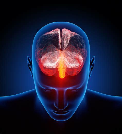 human brain illustrated  millions  small nerves flickr