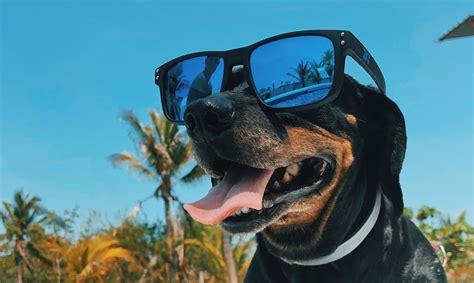 Kā vasarā atvēsinās tavs mājdzīvnieks? Dalies ar foto un ...