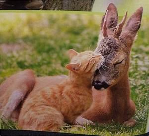 cute animals | ... Cute Animals